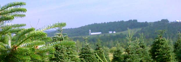Testers Vermont Christmas Trees and Farm Antiques